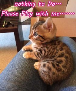 nothing to Do... Please Play with me.......